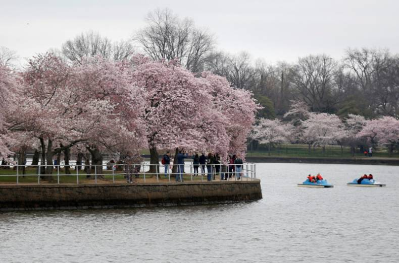 copy-of-2018-04-03t200812z-1675353251-rc1310917d40-rtrmadp-3-spring-cherryblossoms-washington