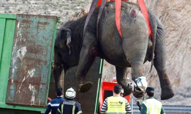 Pictures: Truck carrying elephants overturns