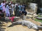 Celebrating crocodile festival in Karachi