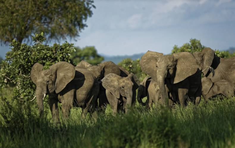 copy-of-tanzania-africa-saving-elephants-13243-jpg-36114-2