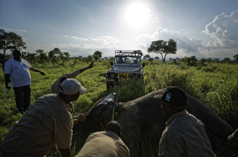 copy-of-tanzania-africa-saving-elephants-84318-jpg-208c1-2