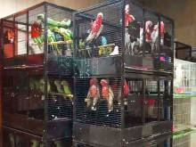 Ministry seizes 400 protected birds in Sharjah