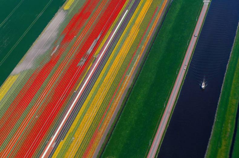 copy-of-2018-04-20t151638z-2048560457-rc12d0ef4f10-rtrmadp-3-netherlands-flowers
