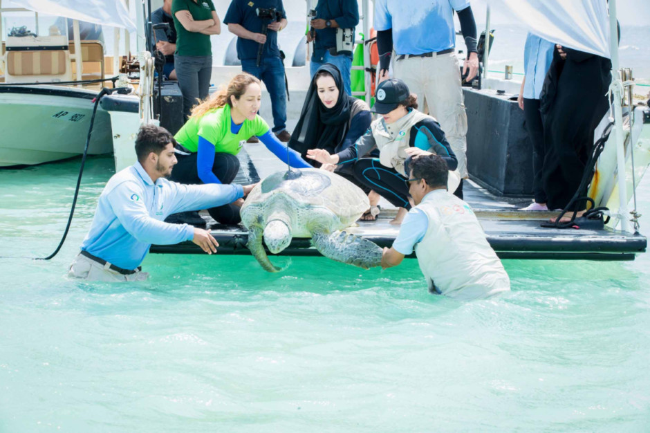 A Green turtle is released off the waters of Bu Tinah Island