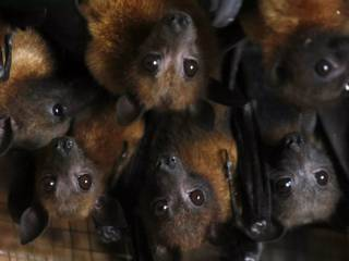 Nipah virus kills 11 in India, sparks alert