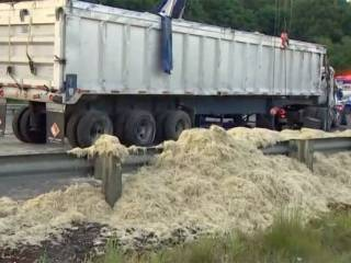 18,145kg of chicken feathers on US road