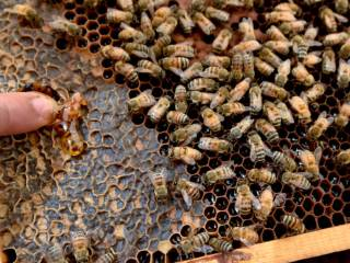 Own a beehive and get 10kg of honey a year