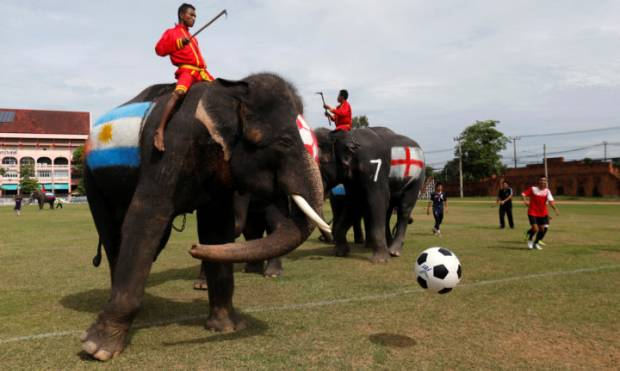 Copy of 2018-06-12T060620Z_1005824742_RC1F1996A8C0_RTRMADP_3_SOCCER-WORLDCUP-THAILAND-ELEPHANTS