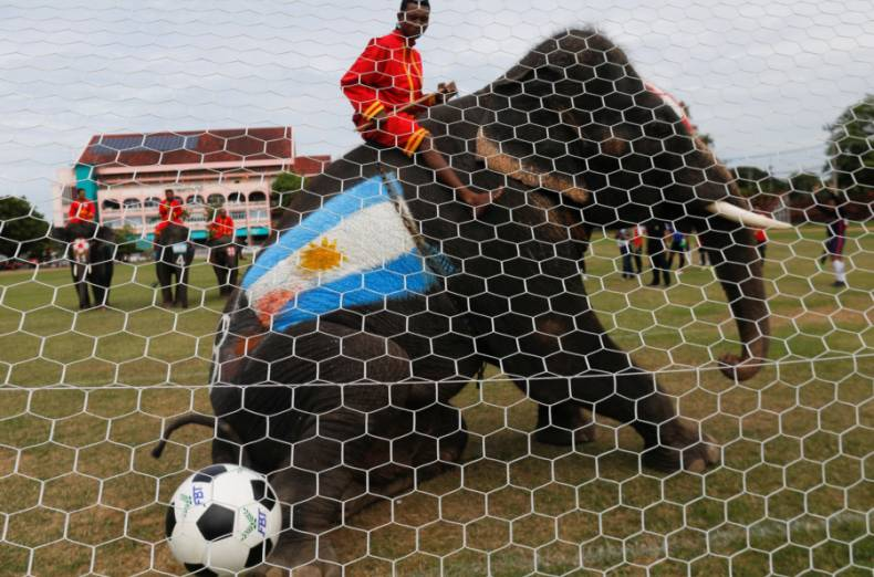copy-of-2018-06-12t054630z-741004778-rc159391a880-rtrmadp-3-soccer-worldcup-thailad-elephants