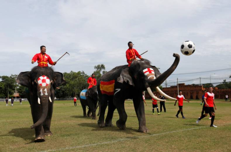copy-of-2018-06-12t060623z-1950169149-rc1c03bfd380-rtrmadp-3-soccer-worldcup-thailand-elephants