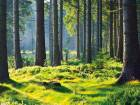 'Iintact forest landscapes' — which can include wetlands and natural grass pastures — are defined as areas of at least 500 sq km with no evidence in satellite images of large-scale human use.
