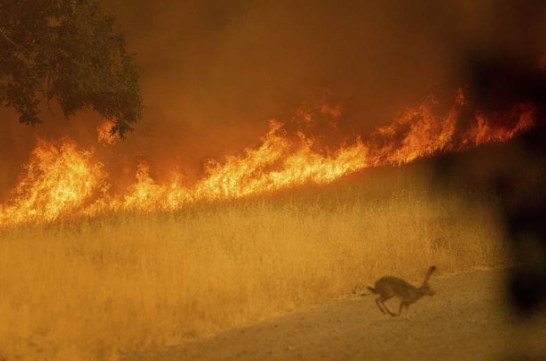 copy-of-california-wildfires-37281-jpg-b891c-1