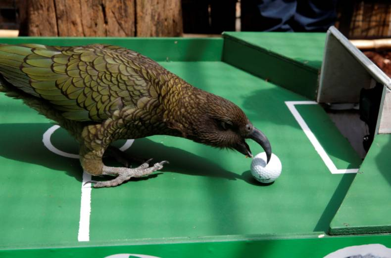copy-of-2018-07-06t055015z-1134638977-rc14493fad50-rtrmadp-3-soccer-worldcup-ury-fra-parrot