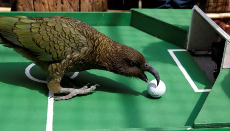 World Cup oracles from the animal world