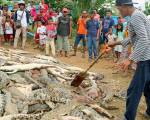 300 crocodiles killed in revenge attack
