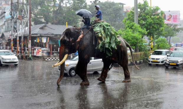 An elephant and its keepers carry bananas trees through heavy monsoon rains on a street in Guwahati