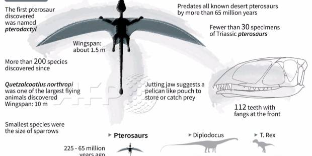 200-million-year-old Pterosaur 'built to fly'