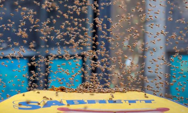Bees swarm Time Square hot dog stand