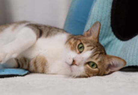 Abandoned animals look for a loving home