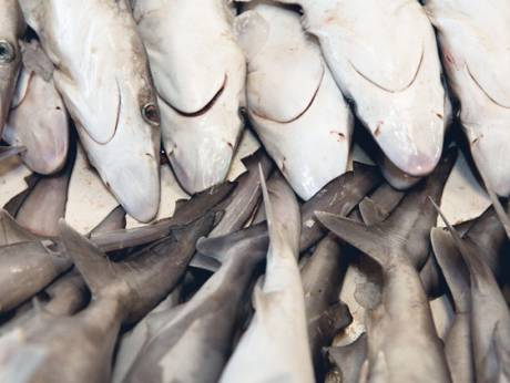 Sharks on sale at a fish market in the UAE