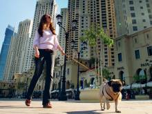 Clean-up or pay fine, Dubai pet owners told