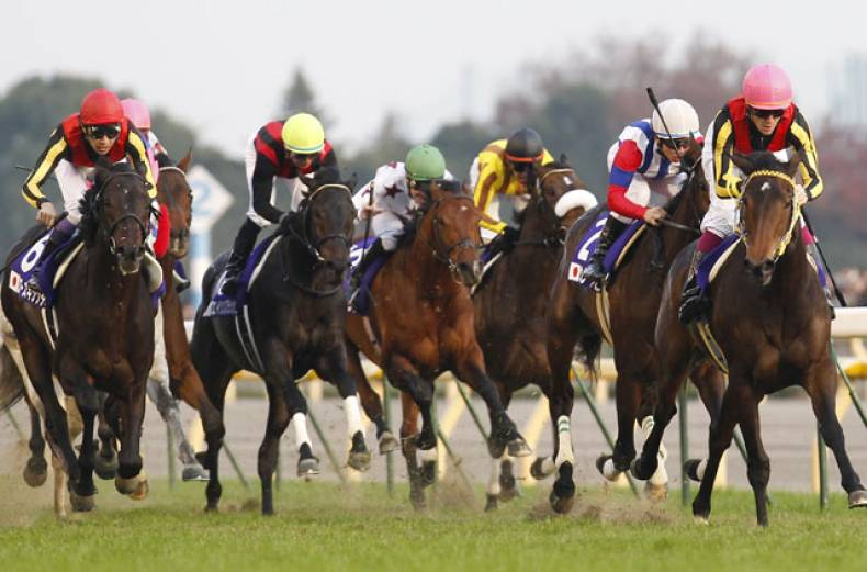 japan-cup-horse-racing