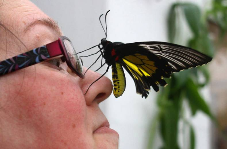 volunteer-caroline-vile-with-a-birdwing-butterfly