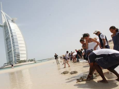The turtles' primary care is carried out at the Burj Al Arab