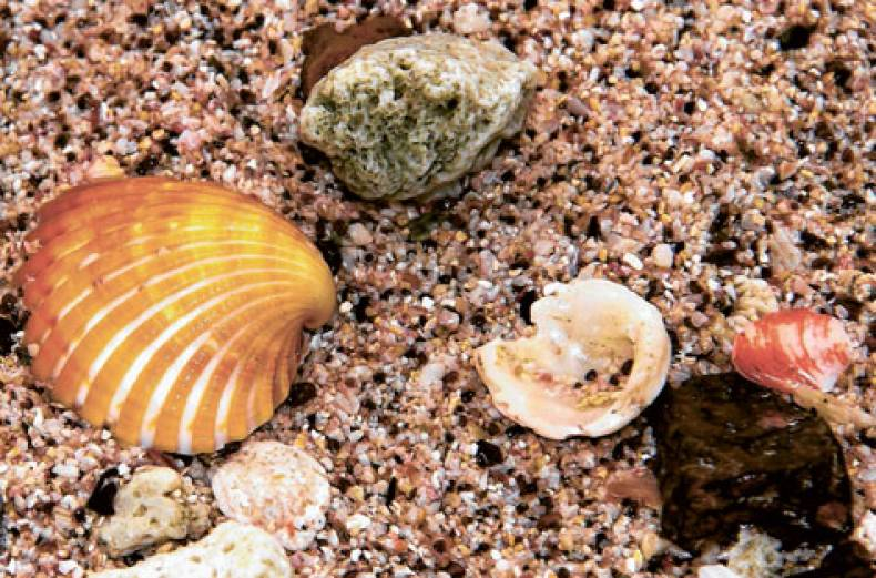sea-shells-on-the-seashore