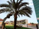 A palm tree stands with the UAE Central Bank in the backdrop on Bainounah street
