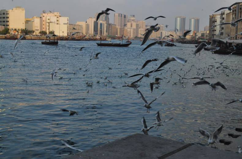 gulf-news-reader-shiuly-ray-took-this-photograph-at-dubai-creek