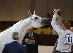 9 events to try: Arabian Horse Championship